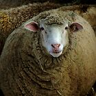 Tuft's Sheep by BavosiPhotoArt