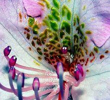 Azalea by BavosiPhotoArt