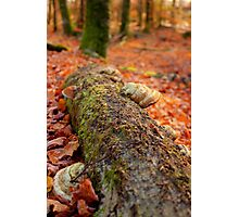 Details of an enchated forest I Photographic Print