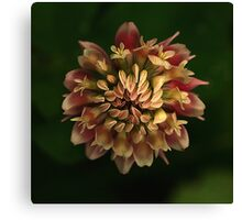 Red Clover Macro l Canvas Print