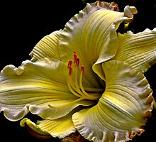 Asiatic Lily by BavosiPhotoArt