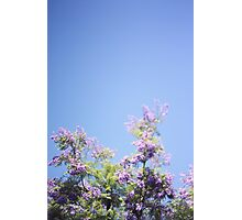 Jacaranda Tree Photographic Print