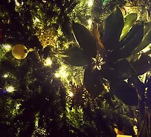 Christmas in the Carolinas by ambassad