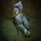 Shoebill Stork by swaby