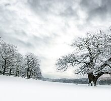 A Winter Scene by imagejournal