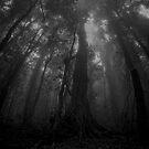 To the tree tops of Dorrigo  by Liam Robinson