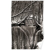 Reflections in the Snow Poster