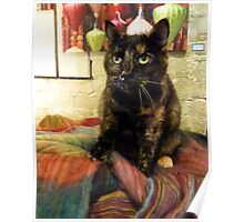 Gift Shop Kitty © Poster