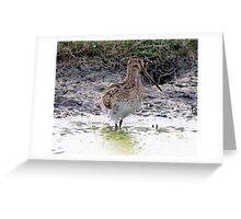 Knee Deep Latham Snipe  Greeting Card
