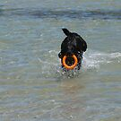 A very Happy Dog, Semaphore Beach, Summer, Sth. Australia. by Rita Blom