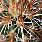 Prickles by Lucy Adams