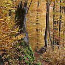 Schöner Wald by Jörg Holtermann