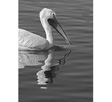 Pelican Reflection Photographic Print