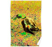 Cute brightly colored duck Poster