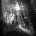 Presidio Path (B&W) by Richard Mason
