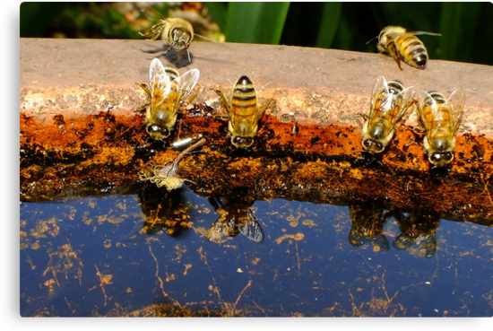 Thirsty Bees by Gabrielle  Lees