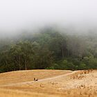 Foggy Wildcat Canyon by gerafotografija
