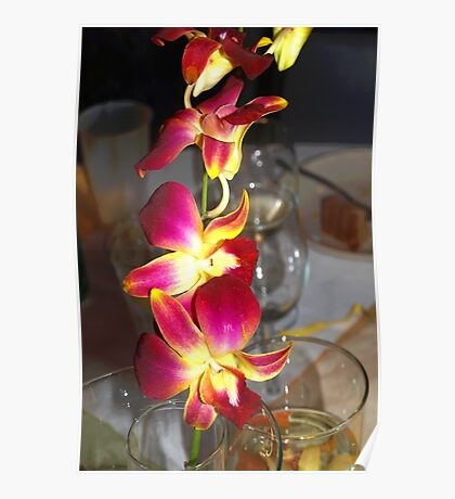 Orchid sprig Poster