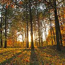 Michigan Fall Sunset by mariajanae