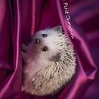 The Little Hedgehog 2 by antmason