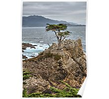 A Cypress Tree Vertical  Poster