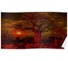 Boabab tree Poster
