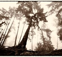 The Firs on Vulture Ridge Trail by toby snelgrove  IPA
