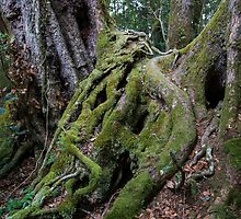 Tree Root Waterfall  by Andrew Durick
