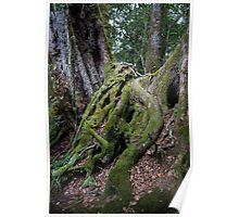 Tree Root Waterfall  Poster