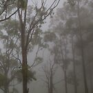 Misty Trees by Andrew Durick