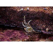 Crawling Crab Photographic Print