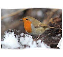 Wintery Robin Redbreast Poster