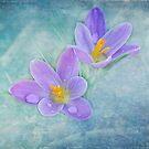 First Bloom by Lynn Starner