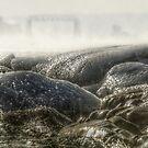 Winter Glow by Sian Houle