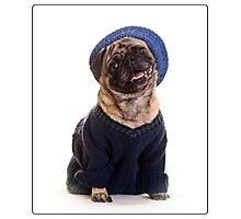 Cute Pug wearing hat and sweater Photographic Print