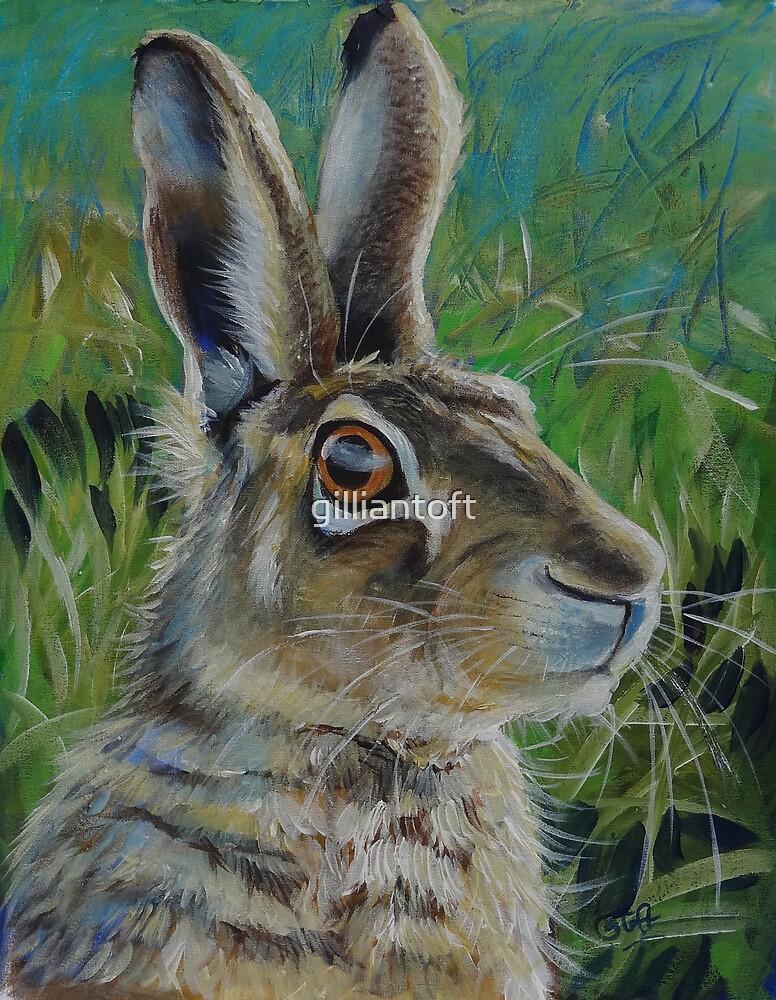 'Alert Hare' by Gillian Toft by gilliantoft