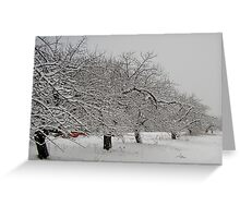 Winter Apple Orchard Greeting Card