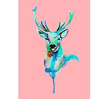CANDY DEER Photographic Print