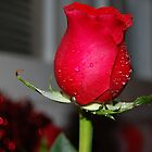Roses are Red...... by Grinch/R. Pross