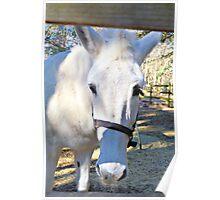 Elvira The White Mule Poster