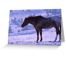 January's Horse Greeting Card
