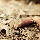 Shotgun Shell by Amaelanders