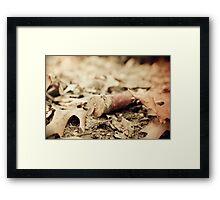 Shotgun Shell Framed Print