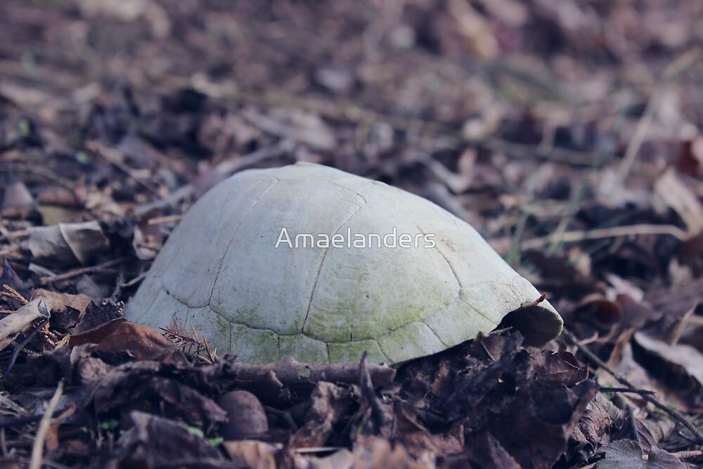 turtle shell by Amaelanders
