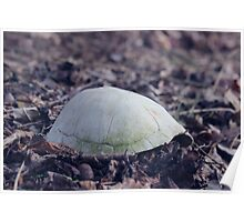 turtle shell Poster