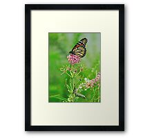 Someday - Monarch Butterfly and Caterpillar Framed Print