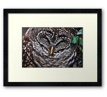Barred Owl Blues Framed Print