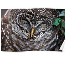 Barred Owl Blues Poster