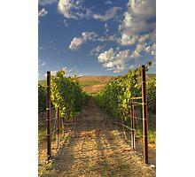Mission Hills Vineyard Photographic Print