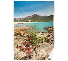 Plage D'Arone Poster